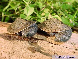 Turtles, Volume 1 Screen Saver - Hatchlings 1.0 program screenshot