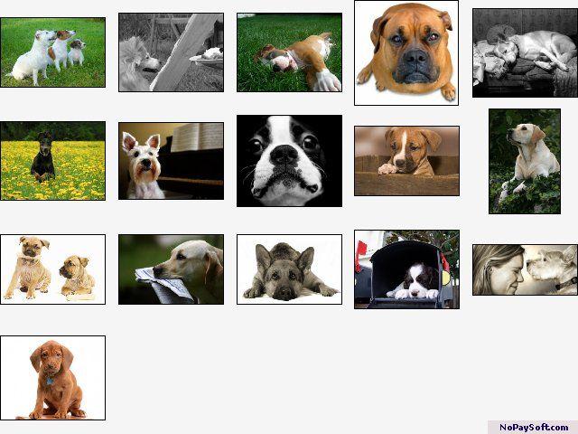 Doggone Doggies Screensaver 1.0 program screenshot